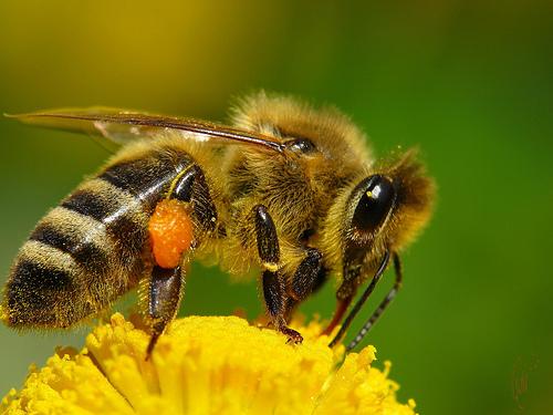 продукты пчеловодства при похудении